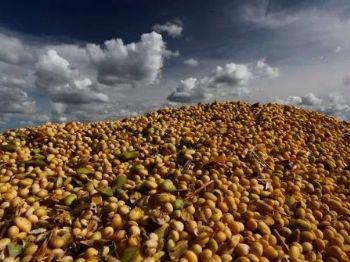 O Brasil se consolidou como maior exportador de soja em 2018, atingindo participação de 56% nas exportações globais do grão (Foto: Jonathan Campos/Ag. Gazeta do Povo)