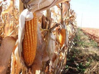 Tendência de redução de preços é provocada por início de colheita em outros estados